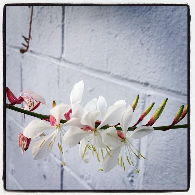Brick Blooms
