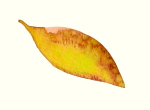 Magnolia Leaves - Yellow Detail